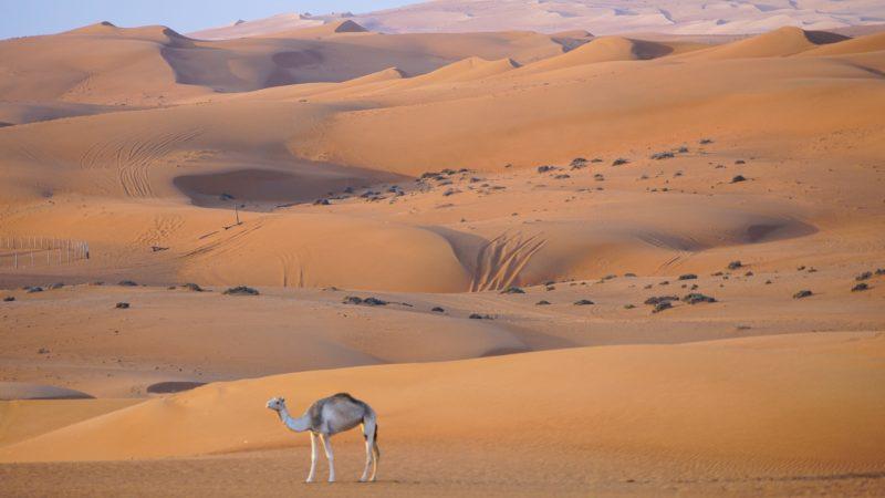 Oman: Wahiba Sands en Wadi Bani Khalid