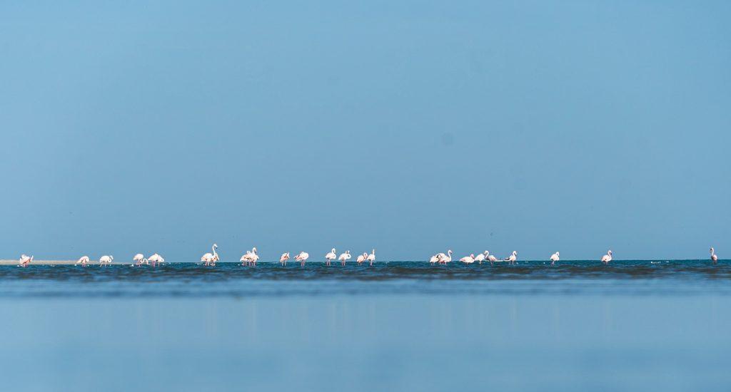 Flamingo's, Oman
