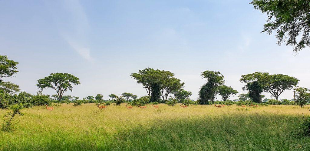 The Uganda border region with Congo