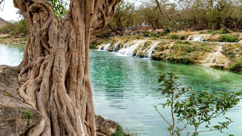 Dagtrip uit Salalah #1: Wadi Darbat en Jebel Samhan