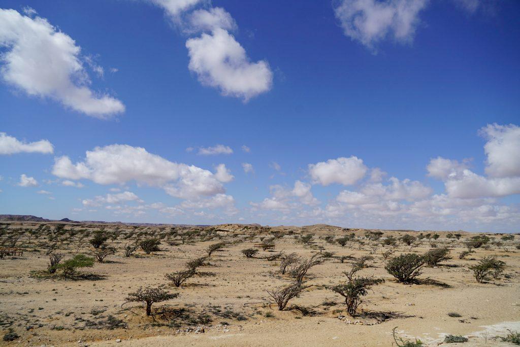 De Rub al Khali - Het Lege Kwartier - Frankincense-bomen