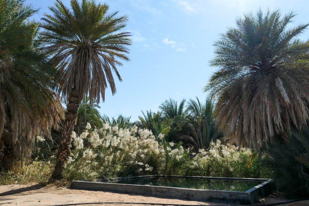 De Rub al Khali - Het Lege Kwartier - De oase van Fasad