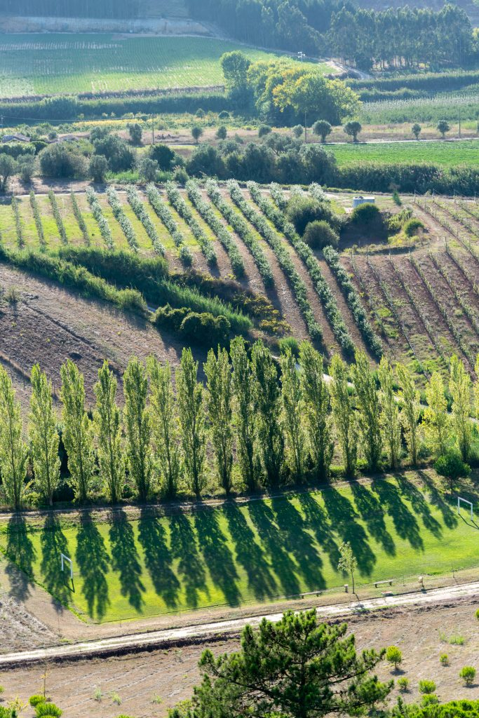 De velden rondom Obidos